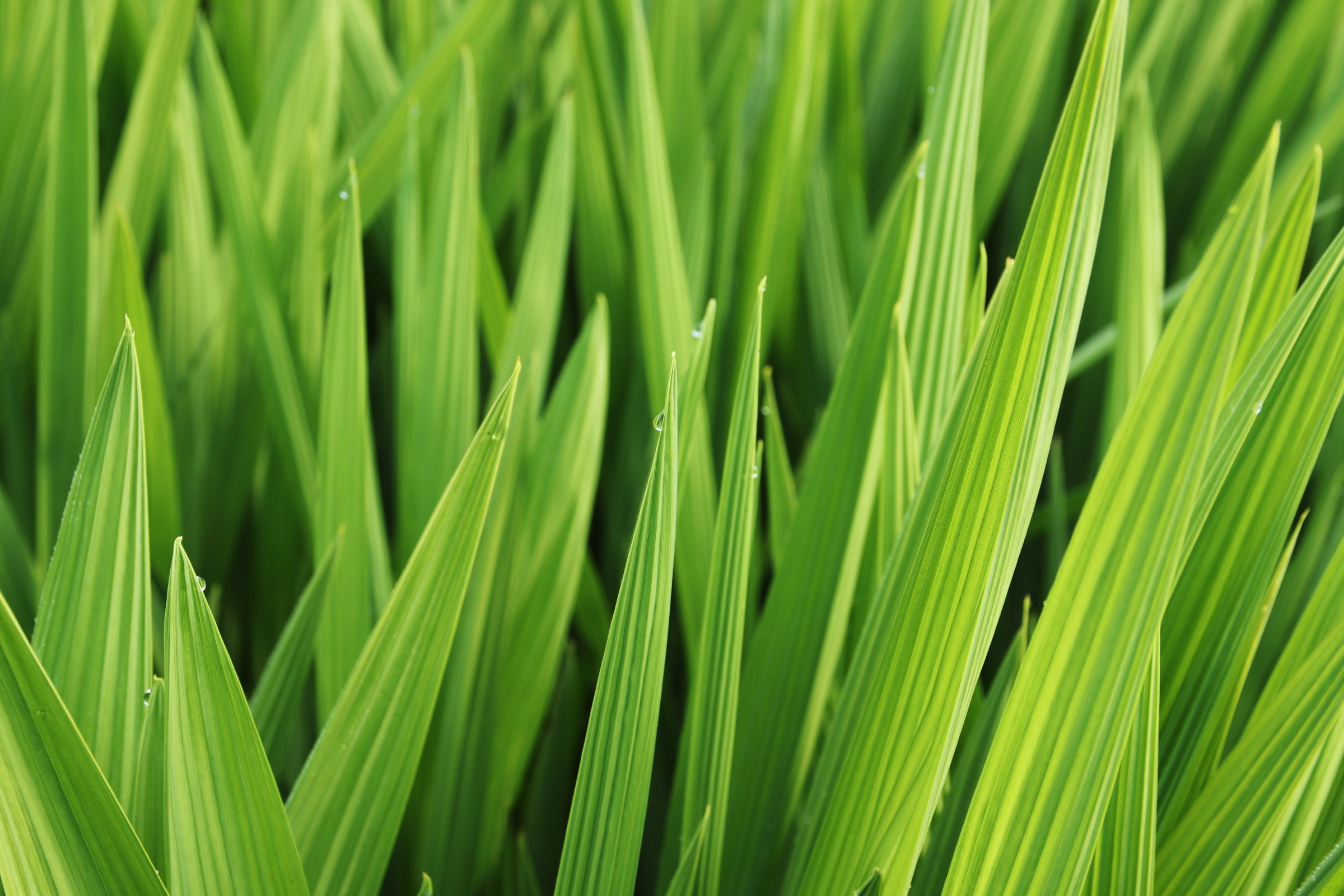 Closeup Shot Beautiful Green Leaves Grass Covered Morning Dew (1)