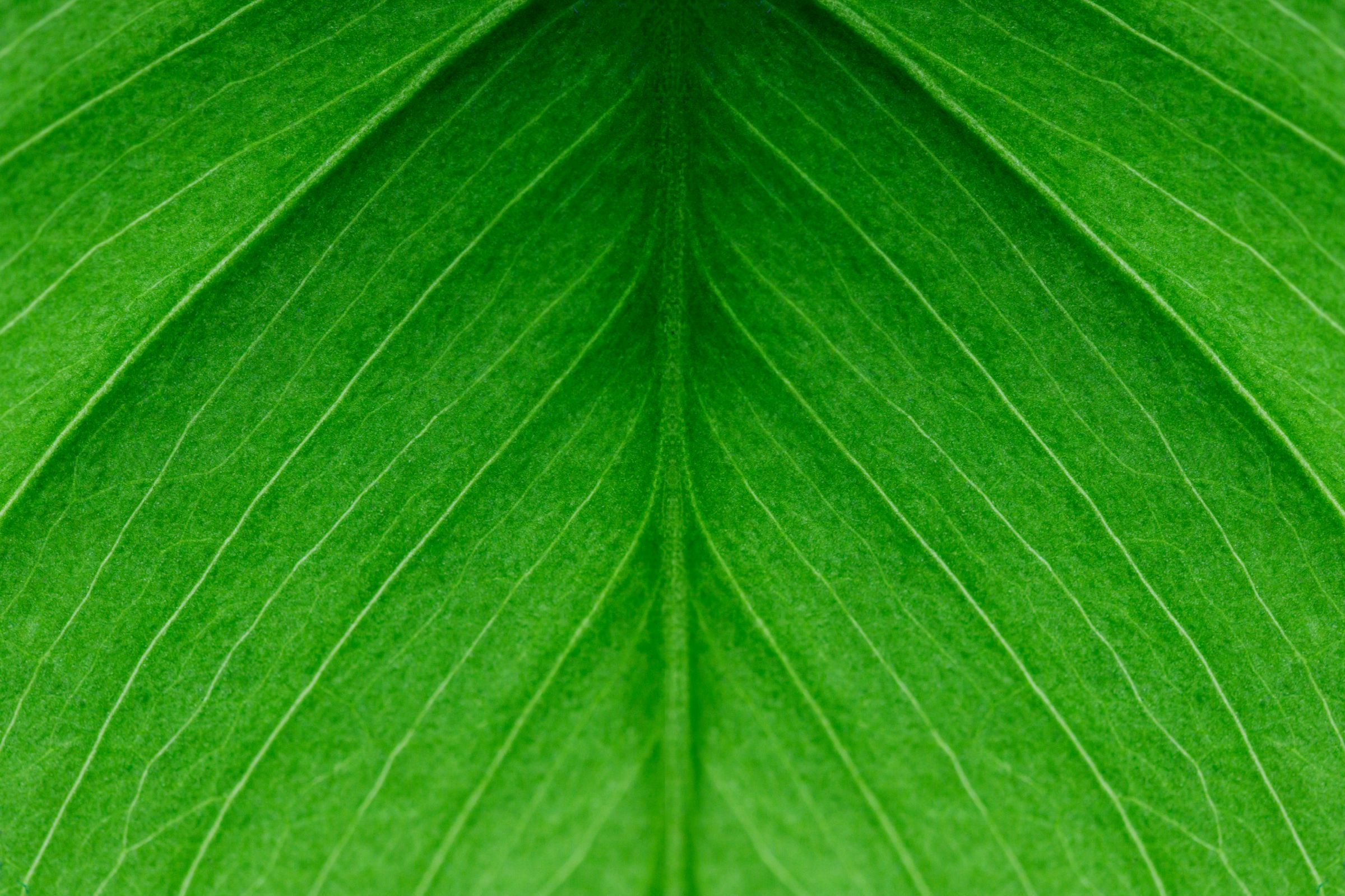 Monstera Leaf Close Up Image Beautiful Green Indoor Plant